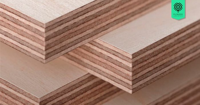 Why Baltic Birch Plywood Is On Top Of Everyone's List